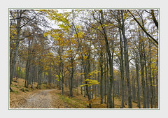- DSC_0746 (Ferruccio Jochler) Tags: autumn forest wood vegetation foliage nature