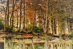Autumn Aden Lake. (artanglerPD) Tags: autumn reflections trees leaves water ferns trunks