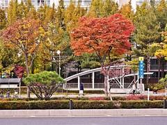 Walking in Autumn... (HARU1231) Tags: gf1 street streetphoto snapshot candid city people life korea