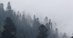 """Der Nebel. Die Nebel. Bäume im Nebel. Im Herbst ist es oft neblig. • <a style=""""font-size:0.8em;"""" href=""""http://www.flickr.com/photos/42554185@N00/31095729322/"""" target=""""_blank"""">View on Flickr</a>"""