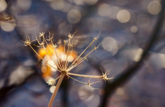 Celebrate (Karen McQuilkin) Tags: seasonchange weed nature bokeh snow ice fallwinter karenmcquilkin twoseasons utah hike trail sun sunbokeh