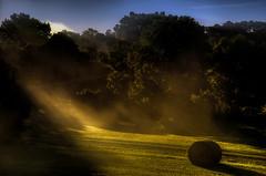 Light Beam (Klaus Ficker thanks for + 2.000.000 views.) Tags: sunrise sunlight light lightbeam erly morning morninglight autumn harvest usa kentucky kentuckyphotography klausficker milf canon eos5dmarkii