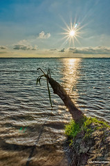 Hope (Asif Hasnat Monon) Tags: padma river riverscape hdr sunshine hope rajshahi bangladesh landscape bestexploredphoto bestphotographers bestphotos bestphotosof2016 bestpic dynamic sonyalpha5000 sonyilce5000 sony ilce 5000 nik efex google photoshopcc2017 photoshopcc17 tree deadtree water lake ocean sea