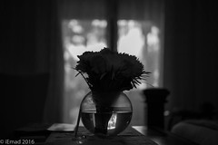 See the world with a touch of beauty... (EHA73) Tags: aposummicronm1250asph leica leicamm typ246 blackandwhite bw flowers interior decoration window curtains bedroom roses bouquet vase shadows