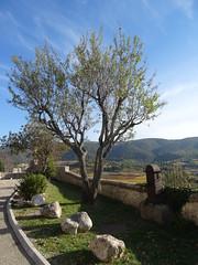 Méthamis (Hélène_D) Tags: hélèned france provencealpescôtedazur paca provence vaucluse méthamis arbre tree fontaine fountain