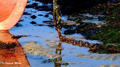 Red Reflection (patrick_milan) Tags: plouguin ploudalmezeau portsall kersaint landunvez landeda lannilis treglonou saintpabu pabu abers finistre brittany bretagne bzh saintrenan renan lanildut aberwrach lampaul plouarzel colors landscape sea mer iroise water saint porsall saariysqualitypictures