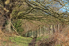 Photo of Offa's Dyke path