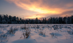 Unexpected morning (A. Stavrovich) Tags: winter pavlovsk pavlovskypark december park russia russianwinter sunrise sun sunrays clouds sky colors colorful field grass trees canon canon5dmarkii canonef1740mmf4l panorama panoramic scenery outdoor wild nature breathtaking beautiful yellow red orange forest hdr ngc