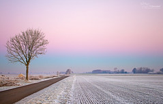 Cold Morning (Paula Darwinkel) Tags: cold winter sky landscape nature beautiful pink ice frozen netherlands