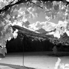 il giardino del mago ;/) The Wizard's Garden (schyter) Tags: china longexposure bw 120 6x6 film recipe ir soup monocromo bn homemade filter e infrared epson medium format mf ttl v600 expired kiev bianco development nero medio bianconero киев 60 analogica analogic formato efke blackwithe r72 pellicola allaperto infrarosso 720nm volna3 ir820 chebarkul homemadescanned