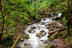 Creek in the woods (steevie1983) Tags: wood longexposure trees tree green nature water creek forest 50mm schweiz switzerland wasser natur bach grün wald bäume baum ch draussen wangs langzeitbelichtung sanktgallen nikond3300