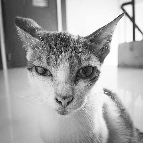 Feline guest - 4