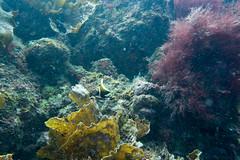 20150829-DSC_0571.jpg (d3_plus) Tags: sea sky fish beach japan scenery underwater diving snorkeling  shizuoka    apnea izu j4  waterproofcase    skindiving minamiizu       nikon1 hirizo  1030mm  nakagi 1  nikon1j4 1nikkorvr1030mmf3556pdzoom beachhirizo misakafishingport  1030mmpd nikonwpn3 wpn3