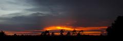 Archbold Sunset (bsmity13) Tags: sunset panorama landscape florida pines pinelands fl archboldbiologicalstation lakewalesridge