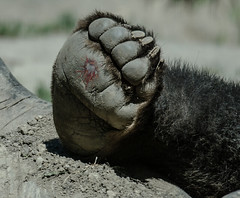 1780 (Jasper Kyodaina) Tags: man animal giant paw toe trampled sole crushed squished stomped