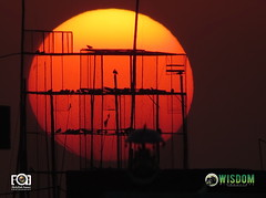 Pigeon Cage Sunset view in Lahore Pakistan (Abdullah Aamer) Tags: pakistan sunset video pigeon coverage lahore videography videocoverage wisdomproductions