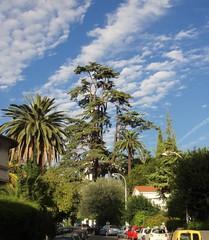 Parc Chambrun - Nice(06) 1de5 (3D-Stretch) Tags: park lebanon tree french nice riviera francaise cte paca cedar cote 06 arbre parc azur liban dazur alpesmaritimes franaise cdre cedrus provencealpesctedazur libani chambrun