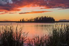 In the Reeds (WherezJeff) Tags: ca sunset summer lake canada island nationalpark high alberta elkisland 2015 fortsaskatchewan astotin alberrta
