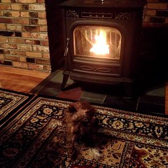 "It's a good thing that our farmhouse has two wood pellet stoves. Pete Townshend's favorite cold weather spot has always been in front of this stove in the dining room. Rather than push her luck by trying to share it with him, Penny Lane has simply settled • <a style=""font-size:0.8em;"" href=""http://www.flickr.com/photos/54958436@N05/22341060461/"" target=""_blank"">View on Flickr</a>"