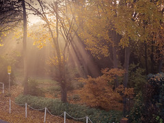 Herbststrahlen