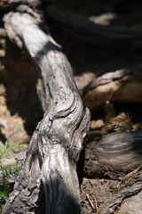 (wenzday01) Tags: travel tree washington branch sony rainier wa mtrainier mtrainiernationalpark naradafalls a6000 selp1650 sonya6000 epz16–50mmf35–56oss