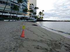 2015HawaiiPhone (9 of 82) (bikeandsail) Tags: hawaii oahu honolulu monkseal 2015 uncruise otanikaimanabeachhotel