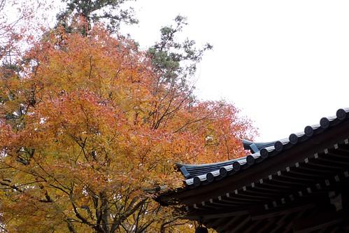 Takao San, 高尾山