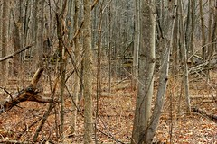 Swampy April Woods (Totally Realistic Visionz) Tags: trees forest woods michigan marsh bog swampy