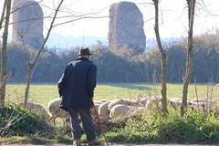 pastore 3 (***Riccardo***) Tags: roma rom sheperd pastore hirt