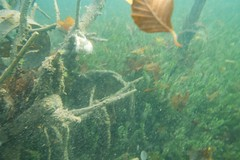 Auch unter Wasser ist Herbst (habi) Tags: diving hausriff renzo thunersee