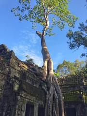 Ta Prohm temple, Ankor, Siem Reap (cheezepleaze) Tags: temple explored
