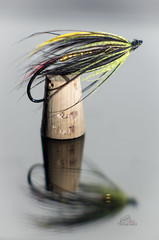 Autumn's arrival (_Matt_T_) Tags: af540fgz cactusv6 closefocus extensiontube oncorhynchus reflection soligor135mmf18 angling fishing flytying hackle hook mykiss steelhead tabletop