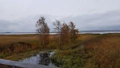 Herbst am Darer Ort (Mecklenburg-Vorpommern) (Oerliuschi) Tags: landschaft natur zingst mecklenburgvorpommern bume himmel wasser meer ostsee