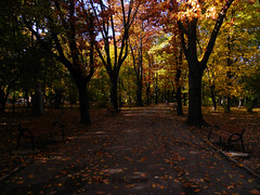 Autumn in  Herstru Park, Bucharest (cod_gabriel) Tags: romnia roumanie romania bucuresti bucharest bucarest bucareste bukarest boekarest autumn toamna toamn herstru herastrau parc park parculherstru herastraupark deciduous foioase