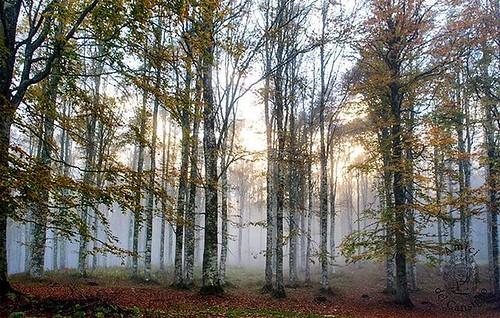 Taci. Su le soglie del bosco non odo parole che dici umane; ma odo parole più nuove che parlano gocciole e foglie lontane #november #autumn🍁 #picoftheday #instalike #like4like #instagood