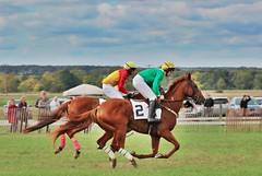 Suspended Animation (dana.ny) Tags: horse equine hunt geneseevalley jumper bay silks race jockey fall english chestnut tie suspension suspended home stretch gallop