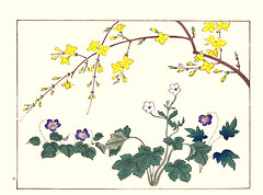 Weeping forsythia, violet, buttercup and violet (Japanese Flower and Bird Art) Tags: flower weeping forsythia suspensa oleaceae violet verecunda viola violaceae buttercup ranunculus ranunculaceae eizanensis hoitsu sakai kiitsu suzuki kimei nakano nihonga woodblock picture book japan japanese art readercollection