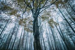 (Djordje Petrovic) Tags: nature tree color mountain morning serbia srbija autumn fall fog tokina tokinalens tokina1224mm nikond80 foggy day