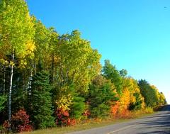 Autumn color, boreal forest, northern Ontario, Canada. (troupial) Tags: canada ontario autumn autumnfoliage northernontario districtoftimiskaming timiskaming haileybury borealforest temiskamingshores temiskaming deciduoustrees