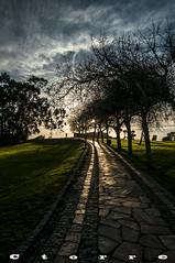 6181 A Camino Illa Pancha (carlostorrebenito) Tags: arbol atardecer camino cesped cielo gente nube sol v tree sunset path grass sky people cloud sun ribadeo lugo espaa iso31662