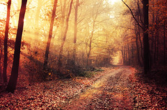 Autumn Walk XXVI. (Zsolt Zsigmond) Tags: forest trees woods light lightrays morning sunrise path pathway road autumn fall trail leaves foliage fog landscape landschaft outdoor bright walk day exposure colours flickr nature red orange