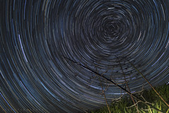 Agave statrail (Justo Fernndez Photos) Tags: startrail stars agave forest night longexposure cielonocturno nightsky onehourstartrail star trail trazadeestrellas argentina nocturna largaexposicin circumpolar southhemisphere sky