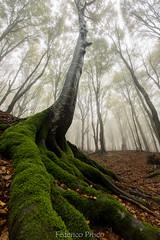 Autunno al Monte Cucco (PG) (Federico Prisco) Tags: wildlife flickraward flickr nature montagna sigma sigma1020 d7200 nikon