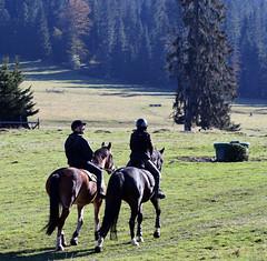 Jura, Switzerland (photoriel) Tags: montfaucon jura switzerland landscape nature autumn horse trees