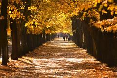 Autumn in park (Milan Mitrovic Photography) Tags: park autumn fall october serbia vrnjacka banja