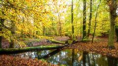 Last Autumn colors ... (Alex Verweij) Tags: bos hierdensebeek alexverweij cnon 5d kleur color kleuren blad bladeren