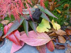 Autumn Colours 3 (chrisinwales) Tags: autumn wales leaves ceredigion autumncolours colours