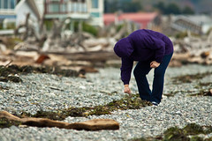 Beachcomber at Point Roberts 4 (LongInt57) Tags: person people woman women beachcombing beachcomber seashell shall seaweed kelp beach shore rocks gravel logs driftwood houses ocean pointroberts washington usa purple blue green brown grey gray