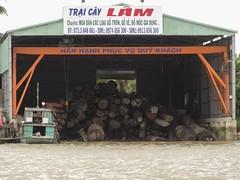 Lumber (program monkey) Tags: vietnam mekong river delta cargo boat ben tre tra vinh wood lumber huge large tree timber trunk logs logging