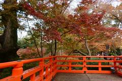 DSC02767 (MrSUIZOU) Tags: 京都 紅葉 北野天満宮 平野神社 十月桜